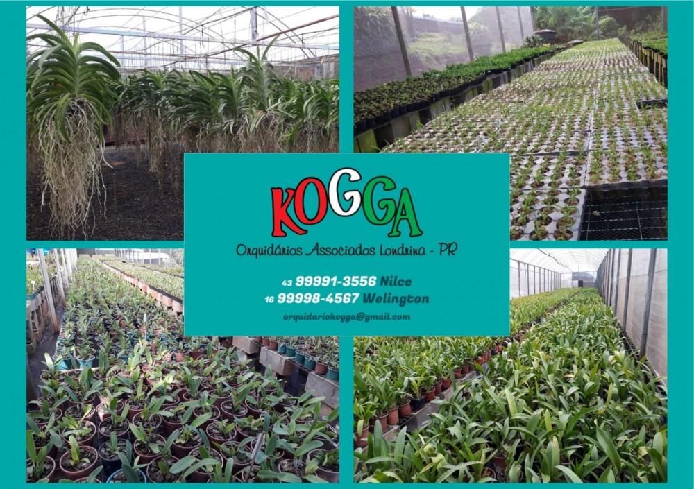 kogga