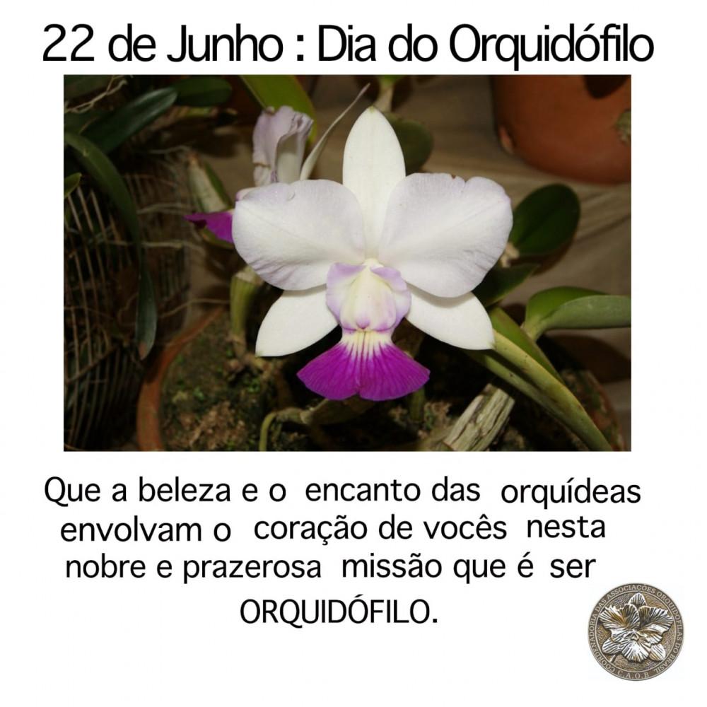 Feliz Dia do Orquidófilo!